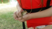 Finding frogs (toads?) at camp
